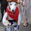cowboyhound_costume