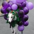 grapes_costume