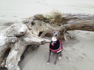Dog & Driftwood