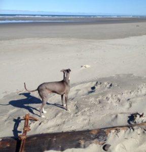 His Beach